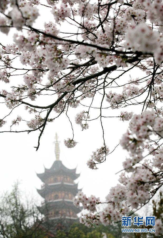 晚报 1 春分赏樱