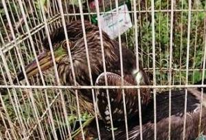 养个野生动物当宠物?危险!小心违法