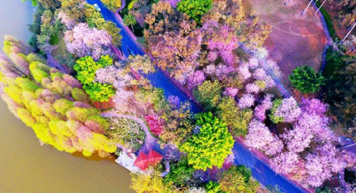 中国旅游日丨海岛、湿地、玻璃桥 无人机带你瞰缤纷南国