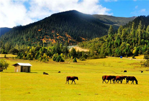 广东体育局大力援助西藏体育发展